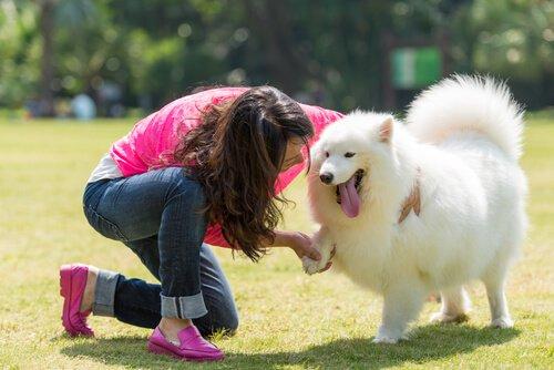 Köpek Sevgisi: Köpeğim Benim En İyi Arkadaşım