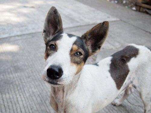 Köpek Sahiplenmeyi Teşvik Eden Heyecan Verici Bir Kampanya