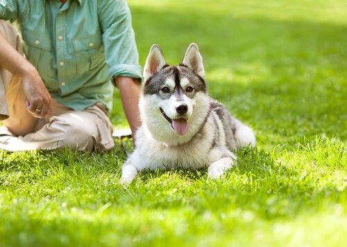 kurt köpeği ve sahibi