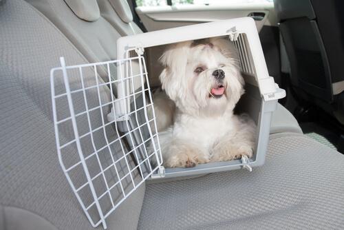 arabada kafes içinde köpek
