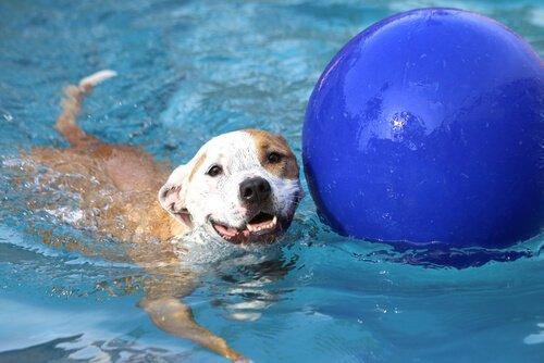 havuz topu ve köpek