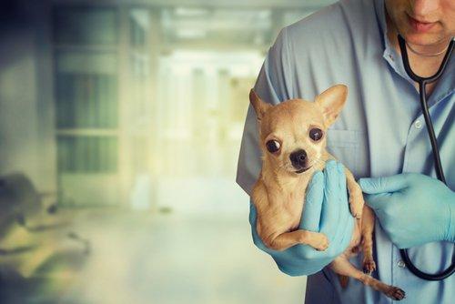 köpek sağlığı