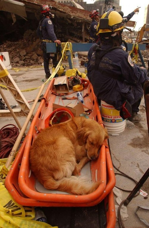 11 eylül kurtarma köpeği
