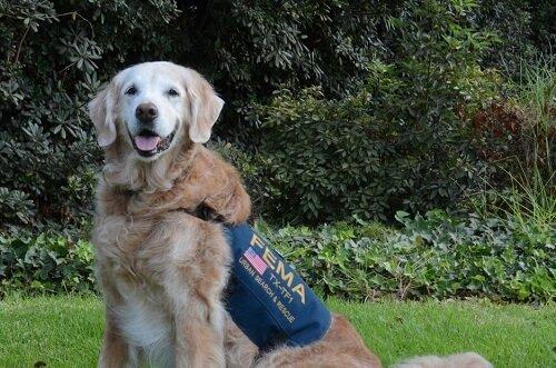 11 Eylül Kurtarma Köpeklerinin Sonuncusuna Veda