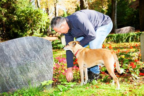 mezarlıkta köpek