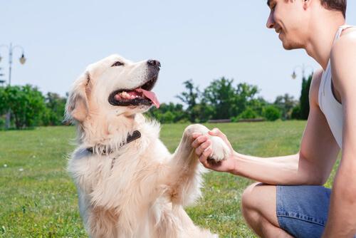 Köpeğiniz Mutlu Ya Da Kızgın Olduğunuzu Anlayabilir