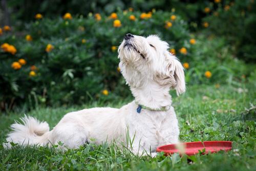 Köpeklerin En Çok Nefret Ettiği 5 Koku
