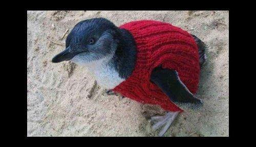 kazak örülen penguen