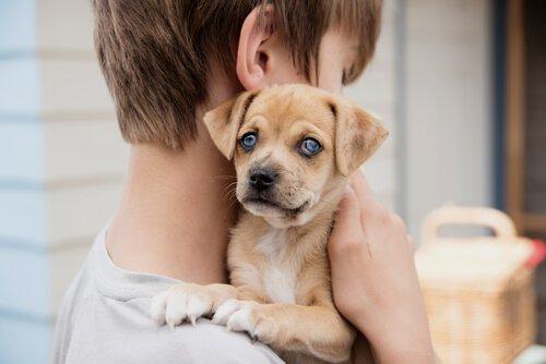 mavi gözlü yavru köpek