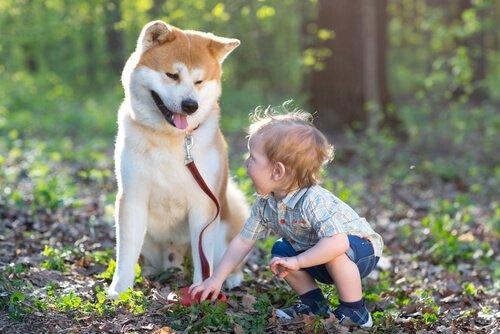 Rehber Köpekler İşitme Engelli Bir Çocuğun Hayatını Nasıl Değiştirir