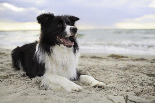 kumsalda yatan köpek