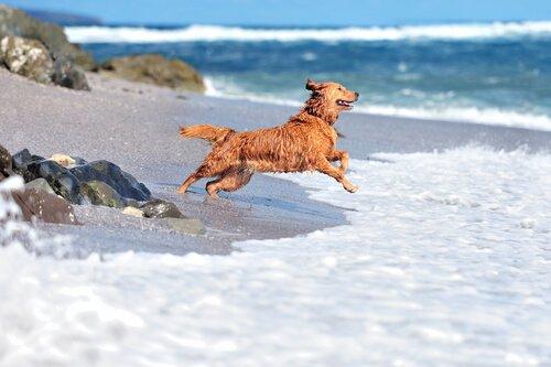 dalgalarla oynayan köpek