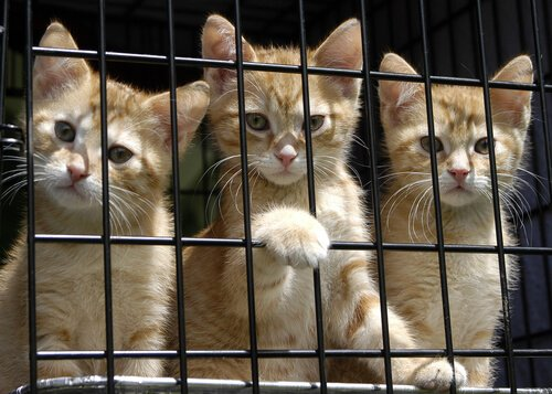 kafeste sahipsiz üç yavru kedi