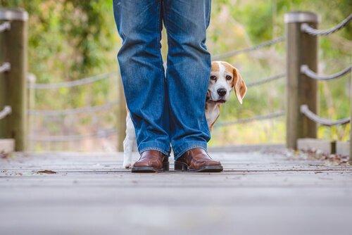 sahibinin arkasına saklanmış köpek