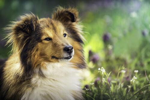 köpeklere yağların faydaları