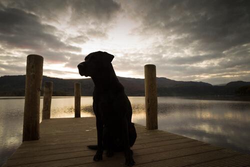 doğada köpek