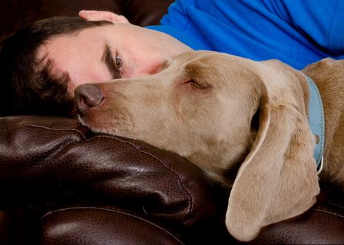 Köpeğinize Sakın İnsanmış Gibi Davranmayın!