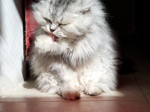 yalanan kedi