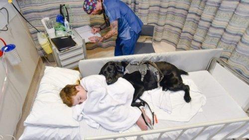 terapist köpekler
