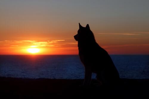 Evcil Hayvanın Yasını Tutmak ile Bir İnsanın Yasını Tutmak Aynı Mıdır?