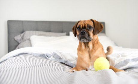 yatakta köpek ve topu