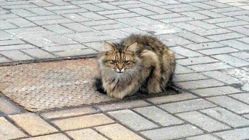 Bir Senedir Kendisini Terk Eden Sahibini Bekleyen Kedi