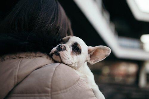sahibinin omzunda yavru köpek