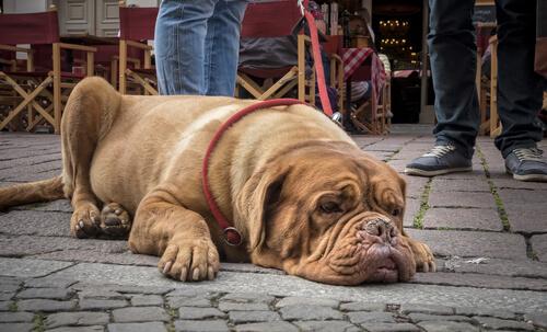 Duyusal Algı: Köpekler Zamanı Nasıl Algılar?