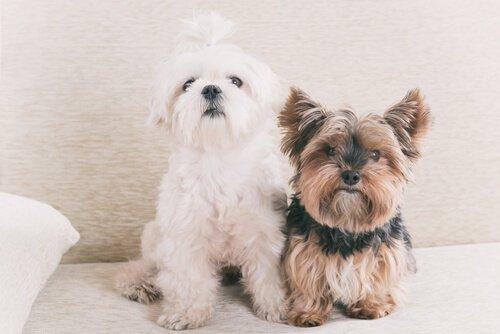Efsane Mi Gerçek Mi: 1 Köpek Yaşı İnsanların 7 Yaşına Eşit