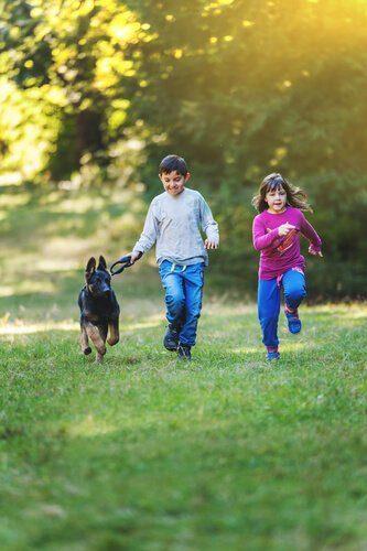 çocuklar ve alman çoban köpeği