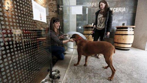 BarFriendly, Köpeklerin Girebildiği İlk Restoranlar