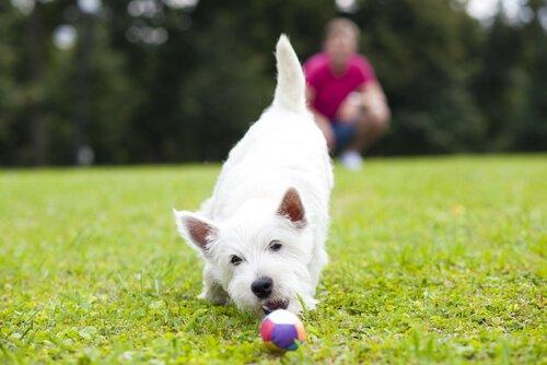 köpeklerle oyun oynamak