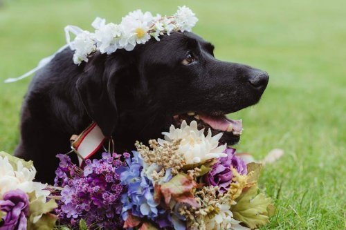 Beyninde Tümör Olan Köpek, Sahibinin Düğününe Katıldıktan Sonra Öldü