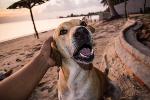 Köpek sevgisi