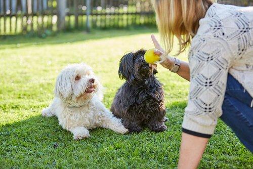 Köpekler Sizi Anladıkları Zaman Daha Çok Severler