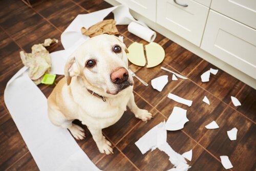Köpeğinizin Davranış Sorunlarını Önlemenin 5 Yolu