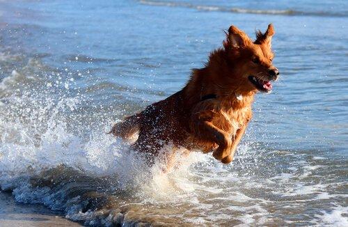 Köpeğinizle Deniz Kenarında Bir Gün