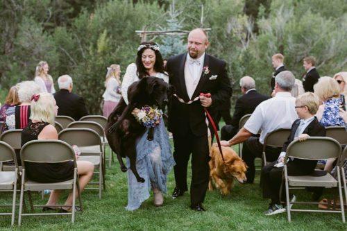 düğünde köpekler