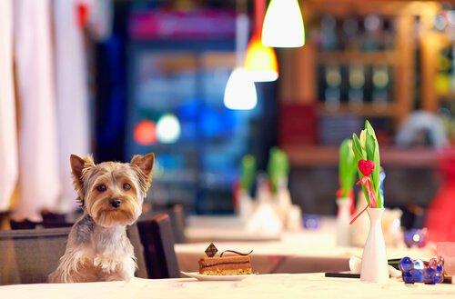 Köpeklerin Girebildiği Evcil Hayvan Dostu Restoranlar