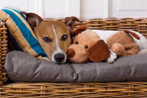 Evcil Hayvanınıza Sizden Hastalık Bulaşabileceğini Biliyor Muydunuz?