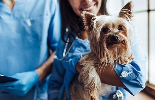Evcil Hayvanları Kısırlaştırmanın 5 Faydası