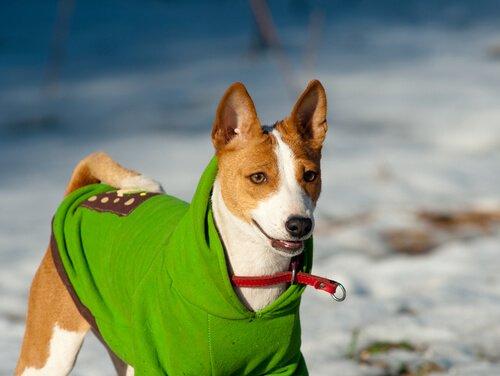 kıyafet giymiş köpek