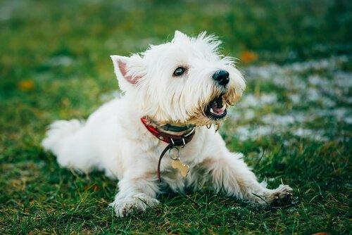 Köpeğinizin Havlamasını Durdurmak için 6 Yöntem