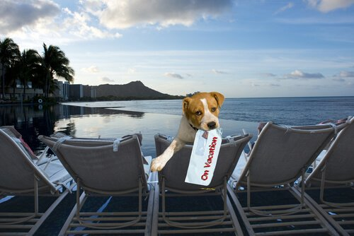 Köpekler İçin Özel Yatağı, Oyuncakları ve Ödülleri İle Hayvan Dostu Bir Otel