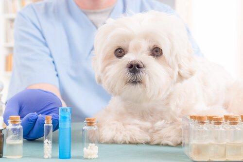 Köpek Yardım Çantasının Vazgeçilmezi 5 Doğal Yağ