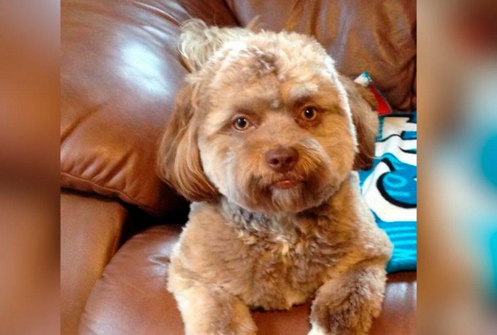 İnsan Suratlı Köpek Yogi ile Tanışın