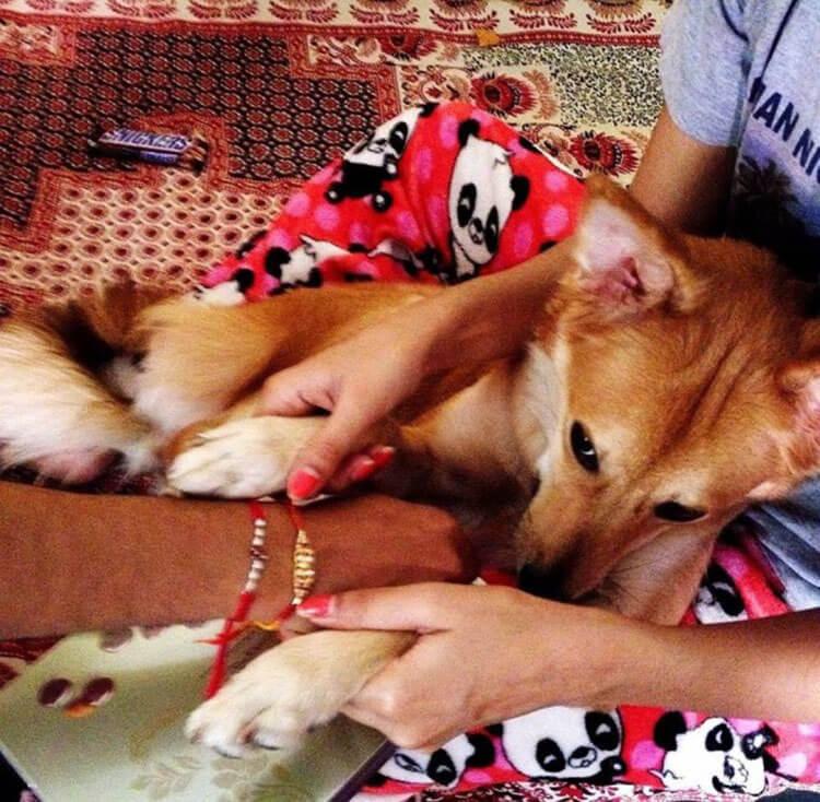 köpeğinden ayrılmayan kız