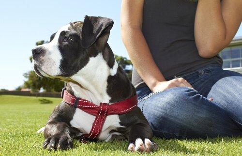 Köpekler Sağlığınıza ve Psikolojinize İyi Gelir