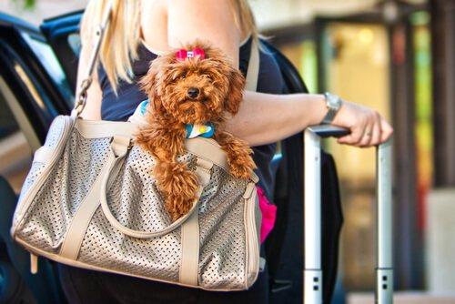 Köpeğinizle Seyahat İçin Harika Uygulamalar