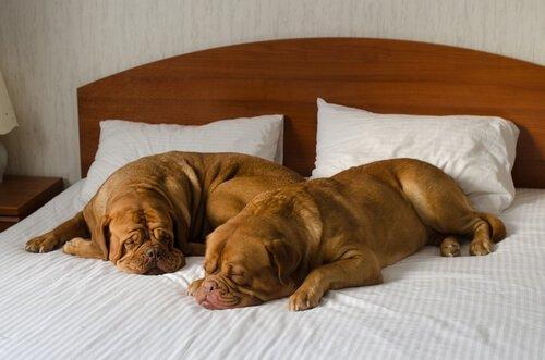otelde köpekler